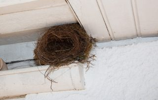 All-Seasons-Steps-to-Prevent-Animals-from-Living-in-Your-Roof.